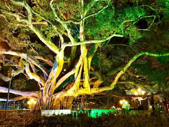 Florianópolis ficando Verde para a Campanha Setembro Verde 💚