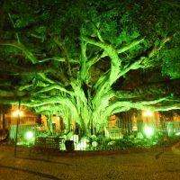 Vários pontos turísticos de Santa Catarina estão iluminados em alusão a Campanha de Prevenção do Câncer Colorretal